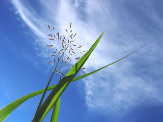 photo grass and blue sky background
