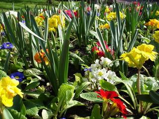 bulbes et fleurs de printemps