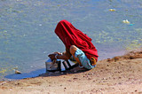 india, rajasthan, thar desert: woman searching water in a very p poster