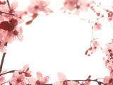 le printemps est là - Fine Art prints