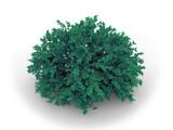 green bush poster