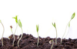 several small seedlings on white background macro poster