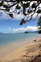 paradise beach framed by a tree