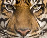 Fototapeta zwierzę - zoo - Dziki Ssak