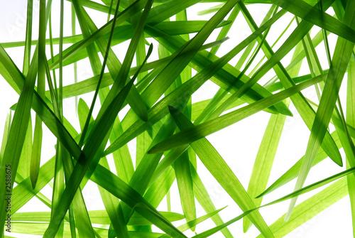 liscie-trawy