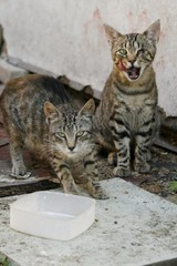 pair of streetcats