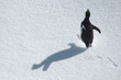 running penguin