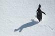 Leinwandbild Motiv running penguin