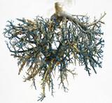 tree of veins 1 poster