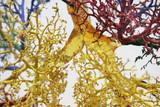 tree of veins 3 poster