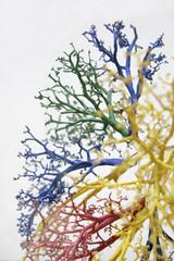 tree of veins 2