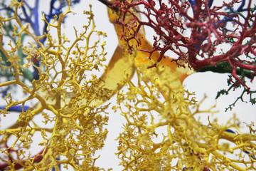 tree of veins 3