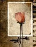 grunge rose postcard poster