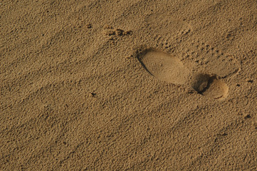 the footstep in sand