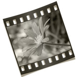 filmstrip flower negative photography poster