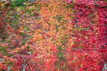 autumn colored background