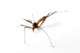 male mosquito 2 poster