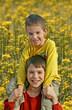 boys in flower field