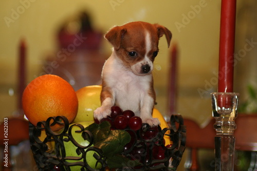 belle and fruits