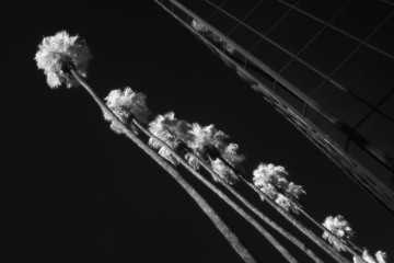 palm trees and building infrared