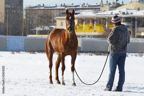 the girl with a horse in the winter on a hippodrome.