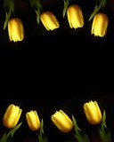 yellow tulips frame