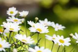 summer flowers - 2638024