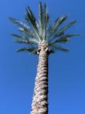 arizona palm tree 2 poster