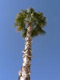 arizona palm tree poster
