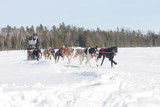 sled dog race northern ontario