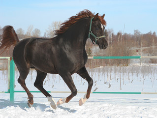 skipping horse.