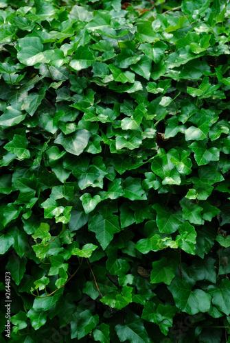 vertical ivy background