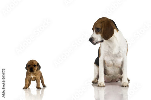 poster of beagle mom and a brown puppy