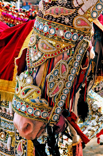 india, jaipur: decorated horse for a wedding