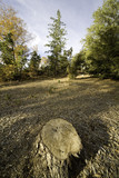 stump forest landscape poster