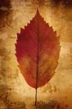 warm vintage background with leaf poster