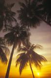 palme al tramonto poster