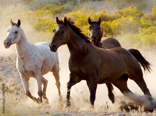 In de dag Paarden running free