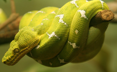 bright green neon snake coiled around branch