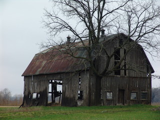 dark wet scary old barn on green grass on a damp o
