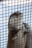 otter want escape poster