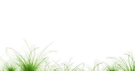 touffes d'herbe
