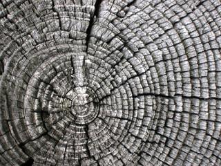 sezione d'albero