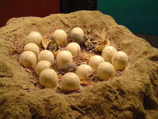 hatched dinosaur eggs