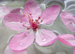 Quadro pink flower