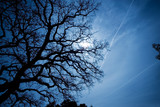 bare tree head against blue sky poster