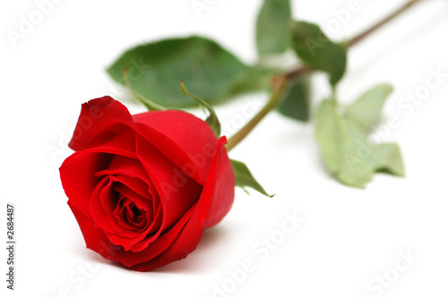 Fotobehang Rozen red rose isolated on the white background