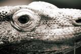 reptile poster