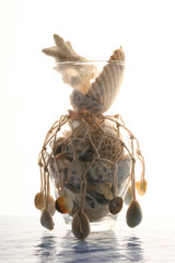 sea cockleshells and stones