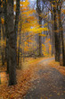 autumn walk way